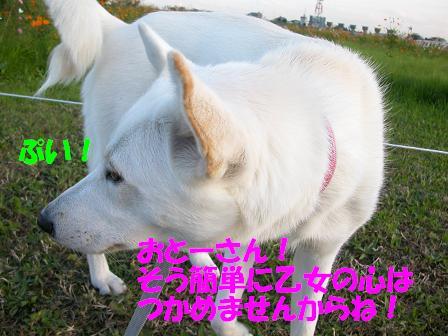 f0121712_2034316.jpg