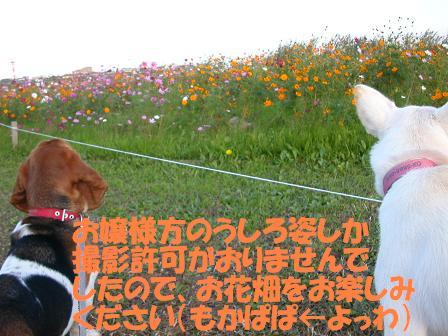 f0121712_20344247.jpg