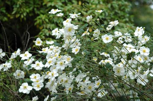 小石川植物園→こぶちゃん→ホームパーティ_f0012718_10201312.jpg