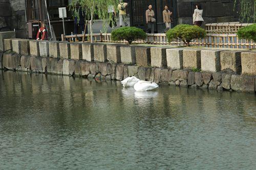 小石川植物園→こぶちゃん→ホームパーティ_f0012718_1050132.jpg