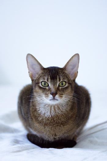 [猫的]自慢_e0090124_7154647.jpg