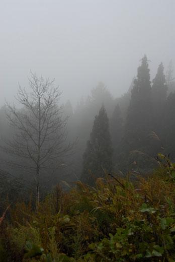 霧の白川村_c0093046_1858789.jpg