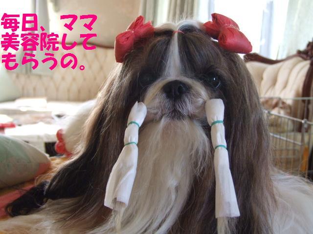 姫の美容_a0091448_22225814.jpg