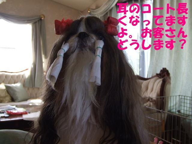 姫の美容_a0091448_22231122.jpg