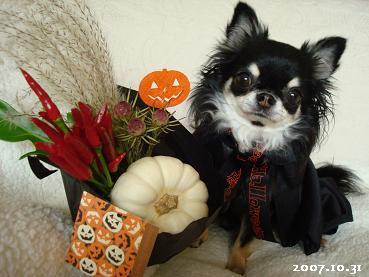 Happy!  Halloween_d0006467_1621170.jpg