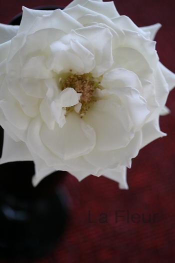 純白のバラ_f0127281_17131879.jpg