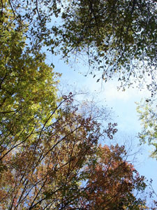 黄金色の森_f0106597_18133981.jpg