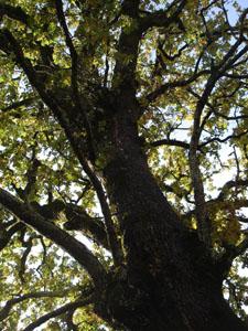 黄金色の森_f0106597_18171060.jpg