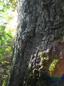 黄金色の森_f0106597_18245458.jpg