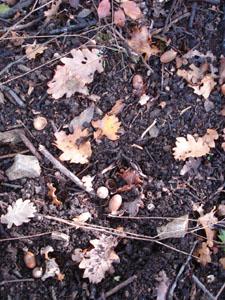 黄金色の森_f0106597_18254437.jpg