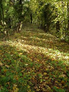 黄金色の森_f0106597_18302932.jpg