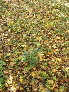 黄金色の森_f0106597_18312596.jpg