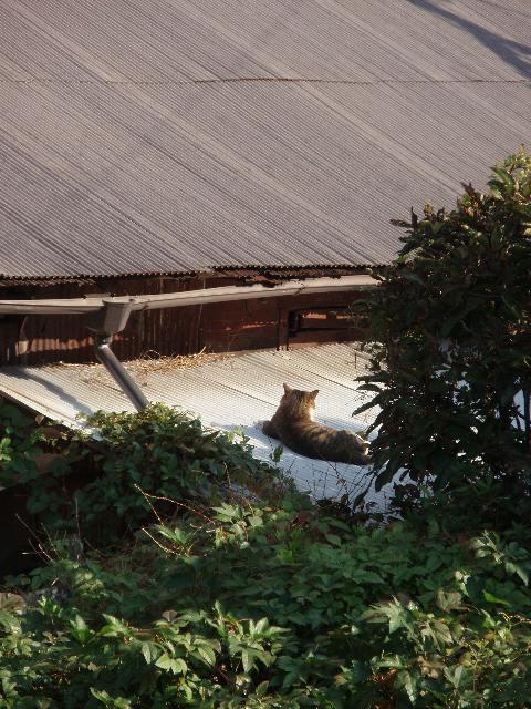 屋根のネコ