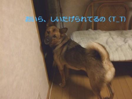 b0087400_2361795.jpg