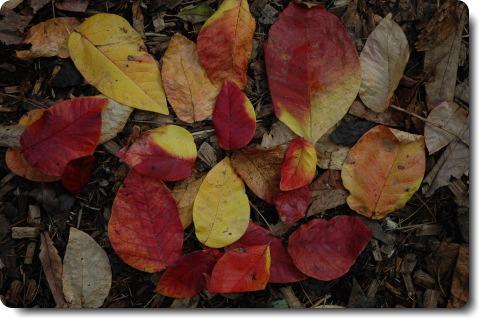 今年の杜は極色彩_f0090019_0572761.jpg