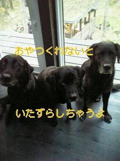 f0148927_7381037.jpg