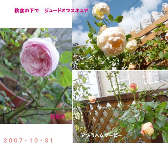 d0020136_10484299.jpg