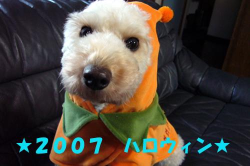 d0070047_11050.jpg