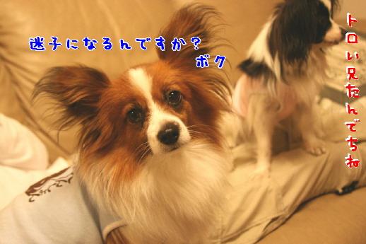 d0013149_0311881.jpg