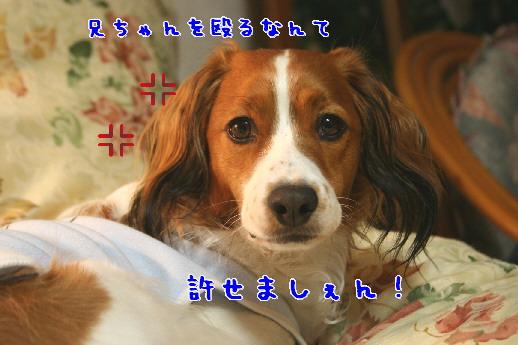 d0013149_0361956.jpg