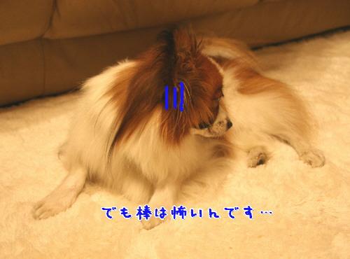 d0013149_046515.jpg