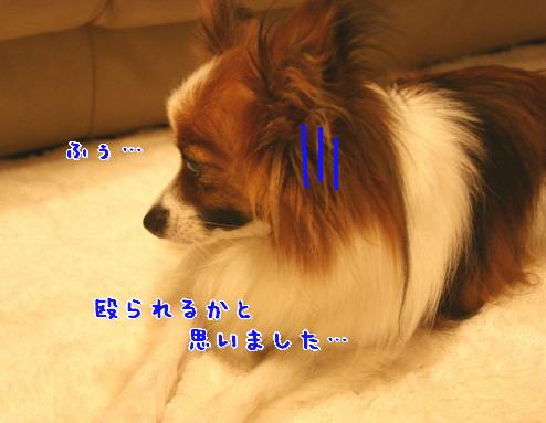 d0013149_05655.jpg