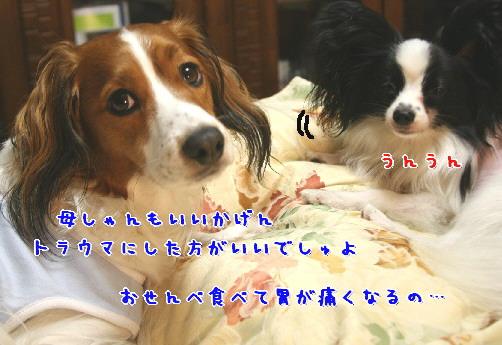 d0013149_1235453.jpg
