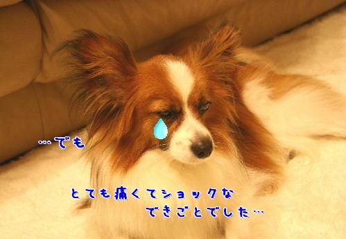 d0013149_15296.jpg