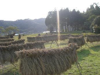 稲刈り2007_e0007456_1494336.jpg