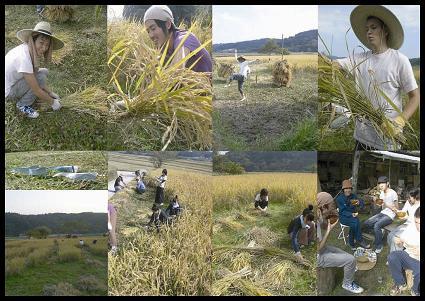 稲刈り2007_e0007456_1525077.jpg