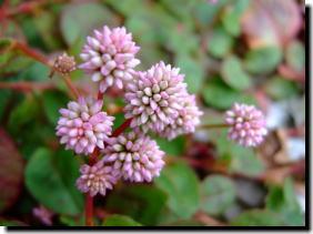 11月3日小さな花