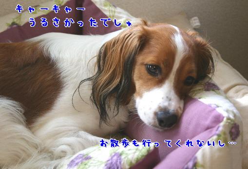 d0013149_0585064.jpg