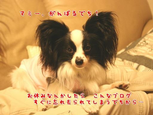 d0013149_1265440.jpg