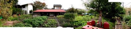 現代の「畑」2態_d0039955_12242151.jpg