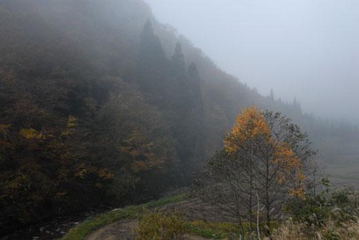 霧の数河_c0093046_7174233.jpg