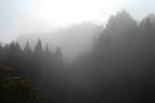 霧の数河_c0093046_7175744.jpg