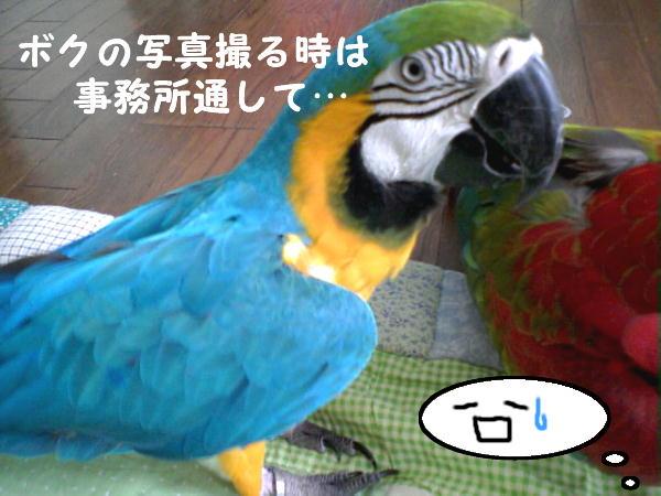 f0132055_2236062.jpg