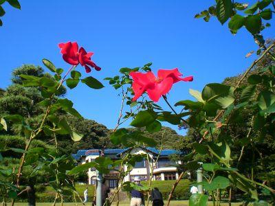 鎌倉文学館にて。_a0094959_2210533.jpg