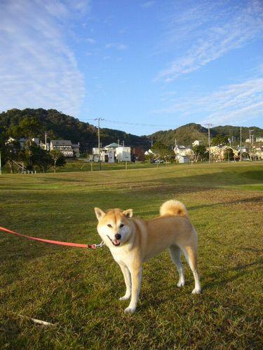 2007年11月4日(日)秋の空と真央ちゃん優勝!!_f0060461_2064143.jpg