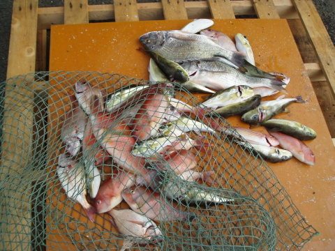 いまりマリーナ秋季釣大会_a0077071_18385677.jpg