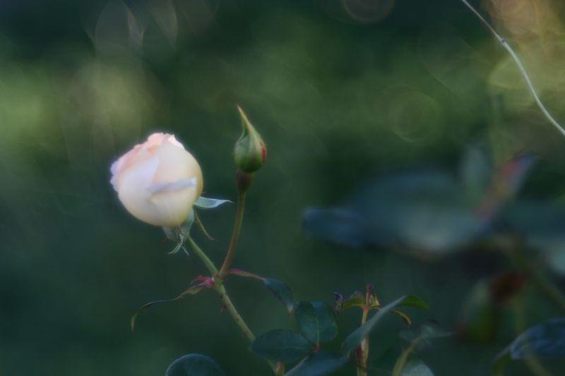 朝の散歩から〜マイヤー・トリオプラン編_f0042194_14493997.jpg