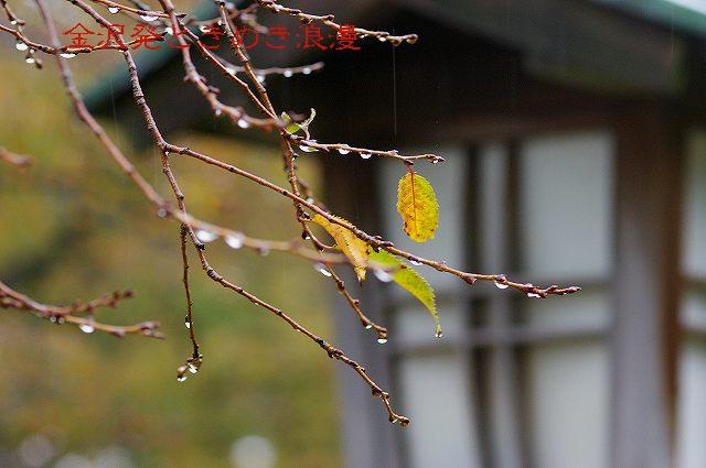 雨の兼六園 マユミの実_d0043136_0491812.jpg