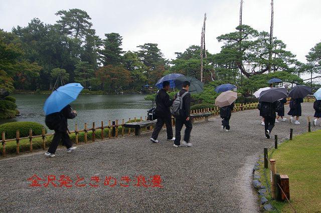 雨の兼六園 マユミの実_d0043136_0521330.jpg