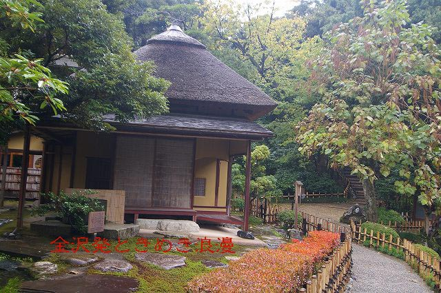 雨の兼六園 マユミの実_d0043136_0542842.jpg