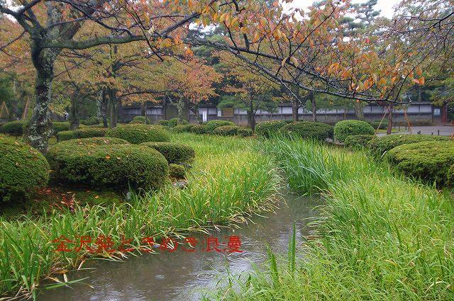 雨の兼六園 マユミの実_d0043136_055103.jpg