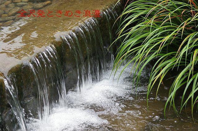 雨の兼六園 マユミの実_d0043136_111764.jpg