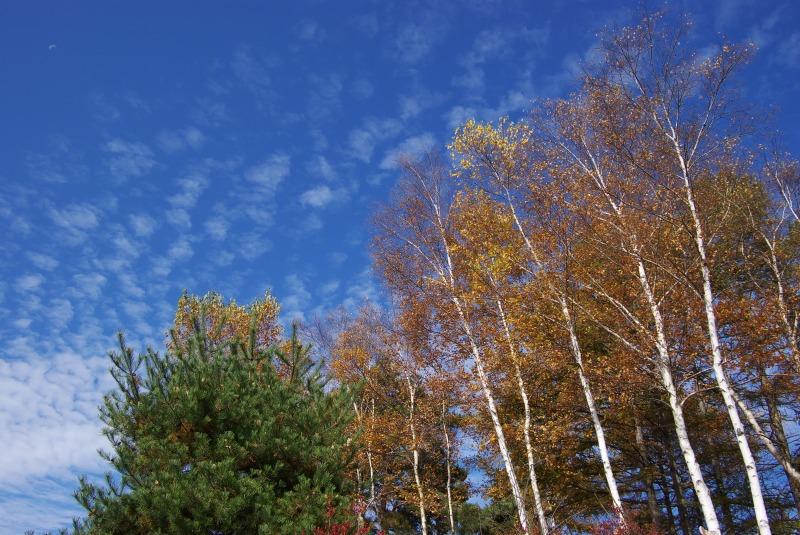 蒼い空 鱗雲_e0063851_053827.jpg