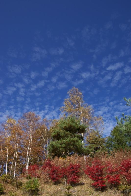 蒼い空 鱗雲_e0063851_055173.jpg