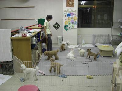 「ワンコ保育園①」_c0126766_21484599.jpg