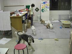 「ワンコ保育園①」_c0126766_2150030.jpg